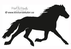 Horse in trot