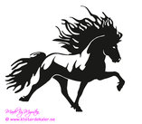 Single Icelandic horse 26