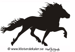 Single Icelandic horse 16 pass