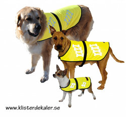 Reflexväst till hunden. STÖR EJ VI TRÄNAR eller med eget textval.