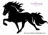 Enkel Islandshäst 3