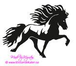 Single Icelandic horse 28