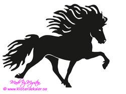 Single Icelandic horse 29