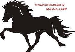 Enkel Islandshäst 5