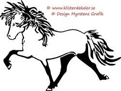 Single Icelandic horse 7