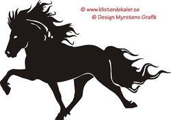 Single Icelandic horse 9