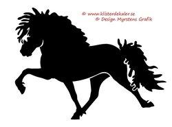 Enkel Islandshäst 10