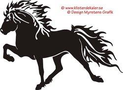 Single Icelandic horse 11