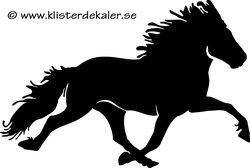 Enkel Islandshäst 33 pass