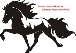 Single Icelandic horse 12