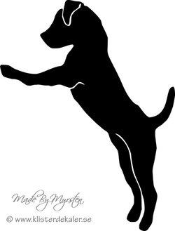 Jack Russell Terrier stående