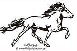 Enkel Islandshäst 31