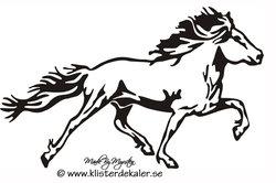 Single Icelandic horse 31