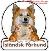 Isländsk fårhund 1