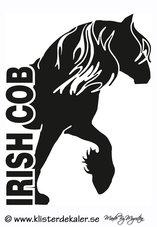 Irish Cob - FRONT 3