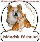 Isländsk fårhund Uppfödare