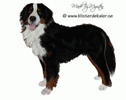 Bernese Mountain Dog, sticker