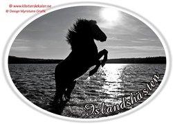 Stegrande Islandshäst oval